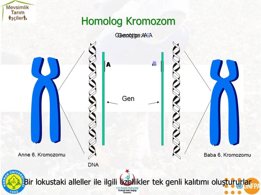 Homolog Kromozom Genotype: A A A A Genotip: A B A B Bir lokustaki alleller ile ilgili özellikler tek genli kalıtımı oluştururlar Anne 6.