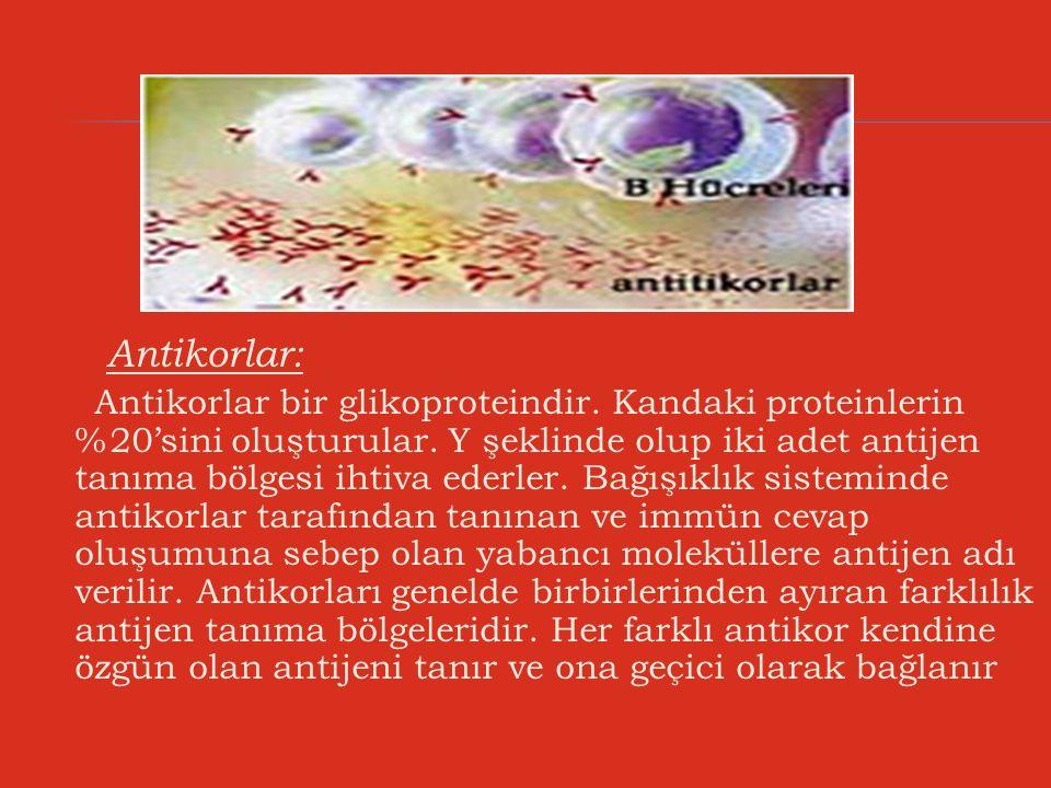 Antikorlar: Antikorlar bir glikoproteindir. Kandaki proteinlerin %20'sini oluşturular. Y şeklinde olup iki adet antijen tanıma bölgesi ihtiva ederler.
