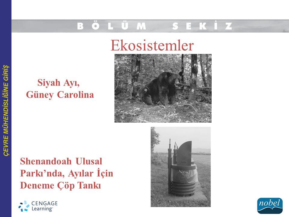 Ekosistemler Siyah Ayı, Güney Carolina Shenandoah Ulusal Parkı'nda, Ayılar İçin Deneme Çöp Tankı