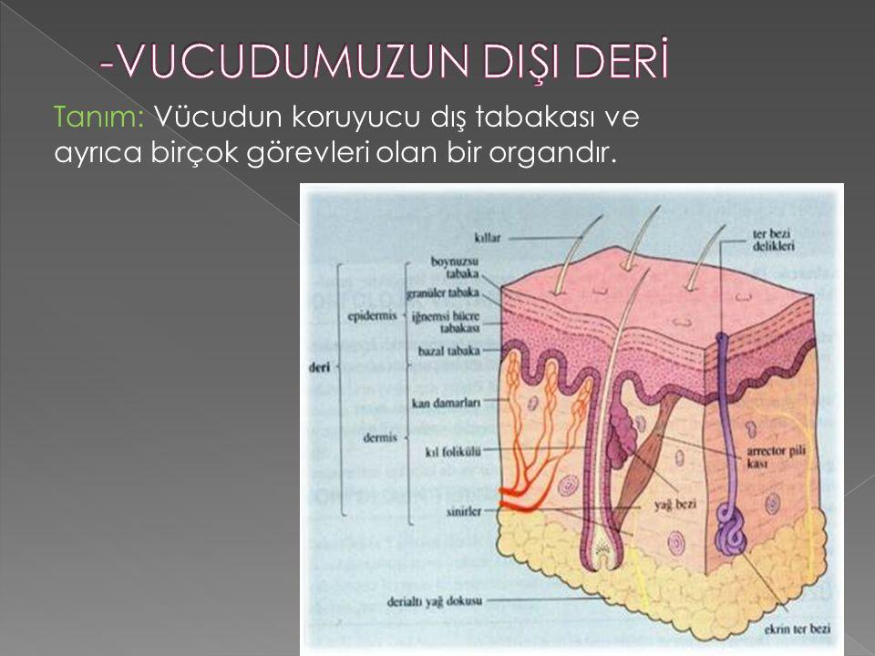 6 Tanım: Vücudun koruyucu dış tabakası ve ayrıca birçok görevleri olan bir organdır.