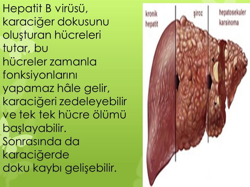 Hepatit B virüsü, karaciğer dokusunu oluşturan hücreleri tutar, bu hücreler zamanla fonksiyonlarını yapamaz hâle gelir, karaciğeri zedeleyebilir ve te