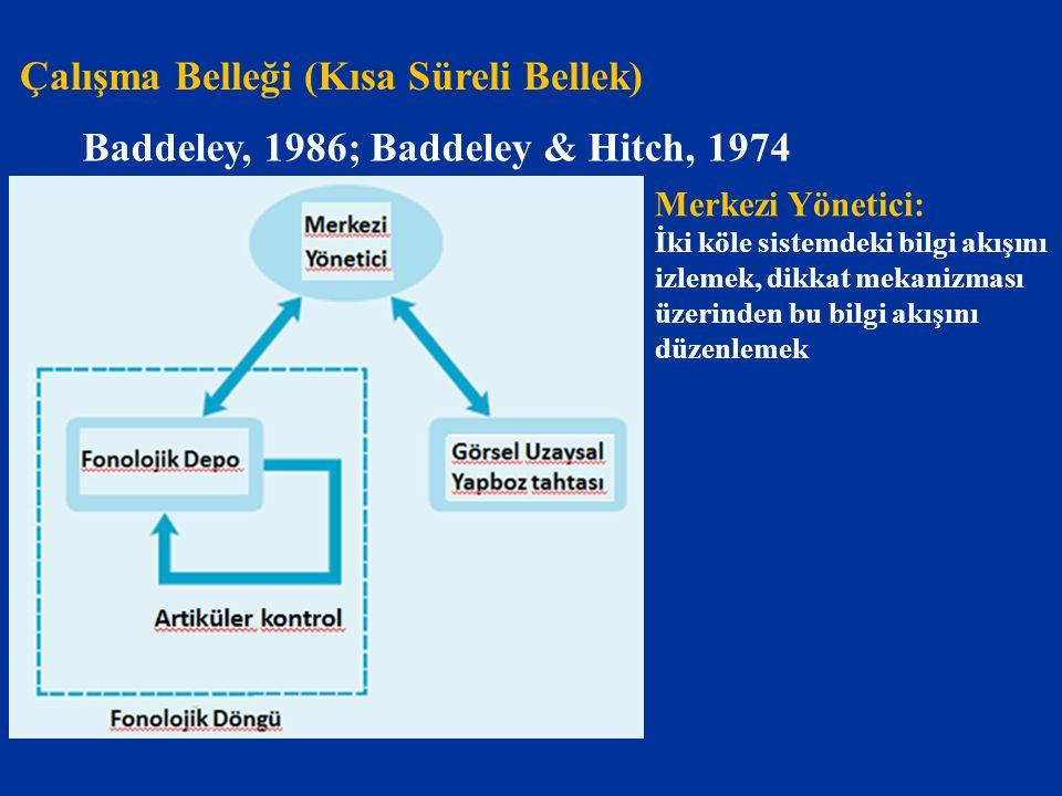 Çalışma Belleği (Kısa Süreli Bellek) Baddeley, 1986; Baddeley & Hitch, 1974 Merkezi Yönetici: İki köle sistemdeki bilgi akışını izlemek, dikkat mekani