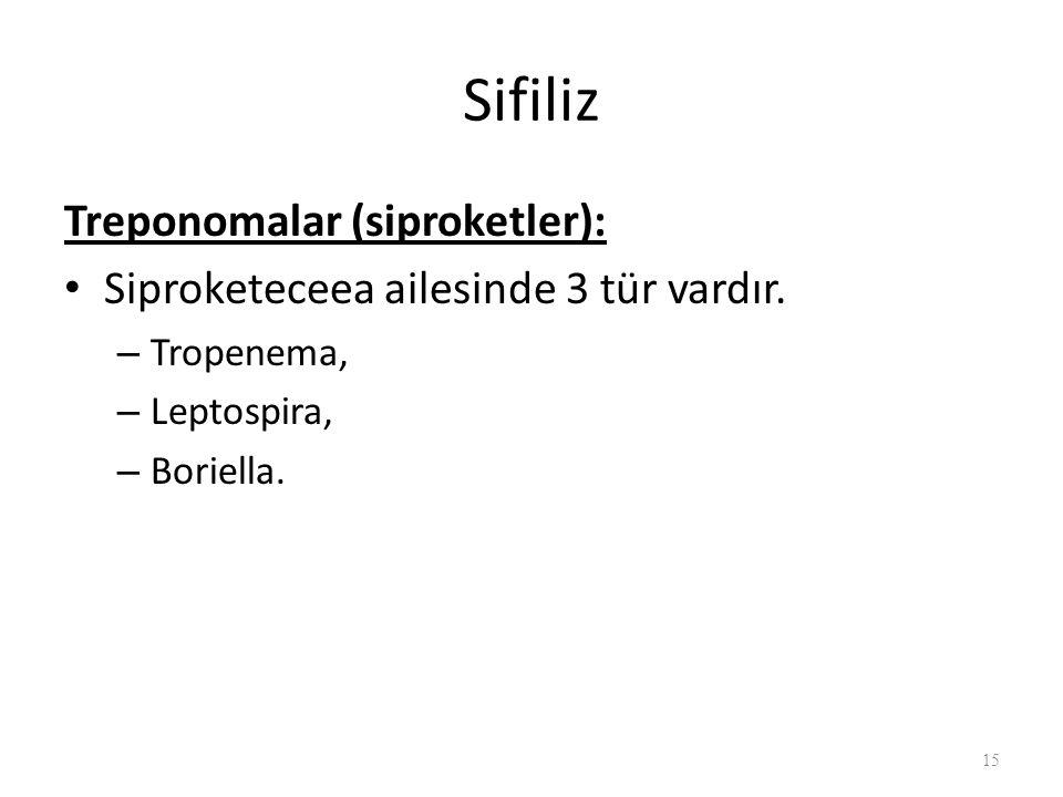 Sifiliz Treponomalar (siproketler): Siproketeceea ailesinde 3 tür vardır.
