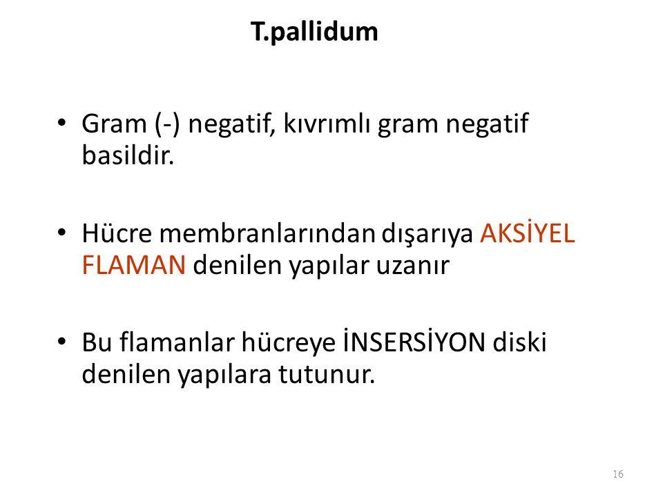 T.pallidum Gram (-) negatif, kıvrımlı gram negatif basildir.