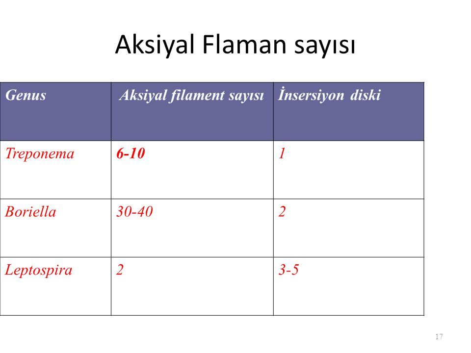 Aksiyal Flaman sayısı 17 Genus Aksiyal filament sayısıİnsersiyon diski Treponema6-101 Boriella30-402 Leptospira23-5