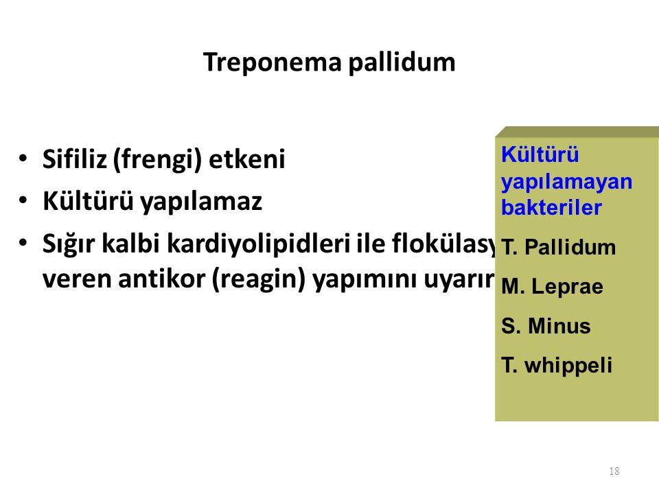 Treponema pallidum Sifiliz (frengi) etkeni Kültürü yapılamaz Sığır kalbi kardiyolipidleri ile flokülasyon veren antikor (reagin) yapımını uyarır 18 Kültürü yapılamayan bakteriler T.