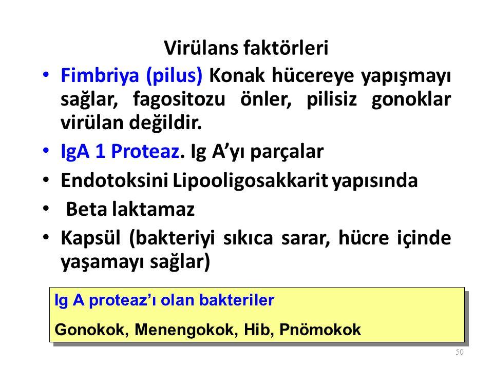 Virülans faktörleri Fimbriya (pilus) Konak hücereye yapışmayı sağlar, fagositozu önler, pilisiz gonoklar virülan değildir.