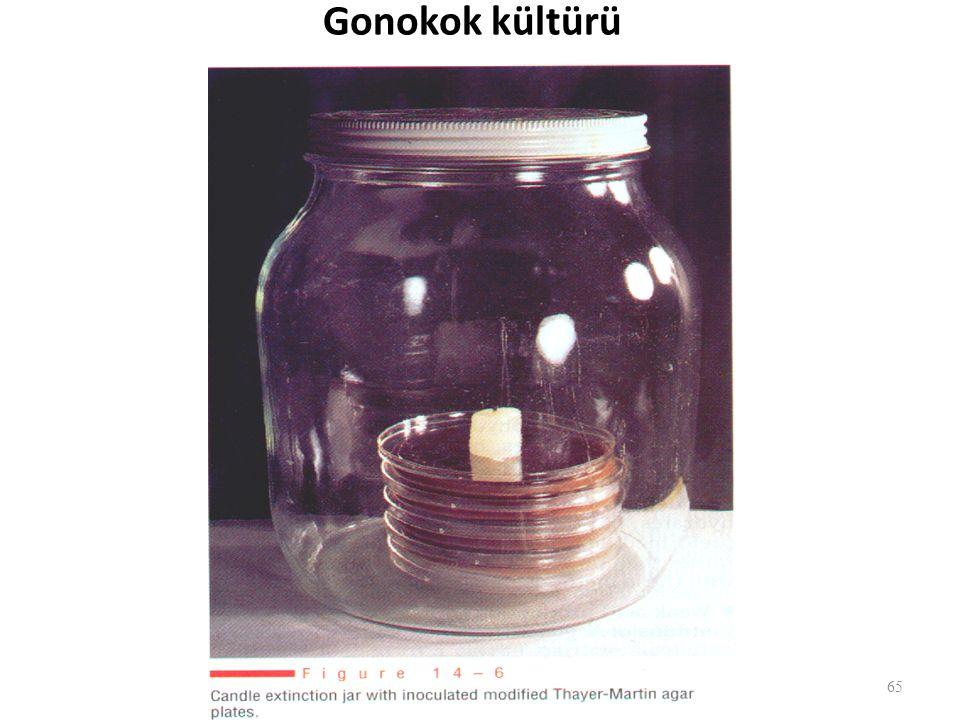 Gonokok kültürü 65