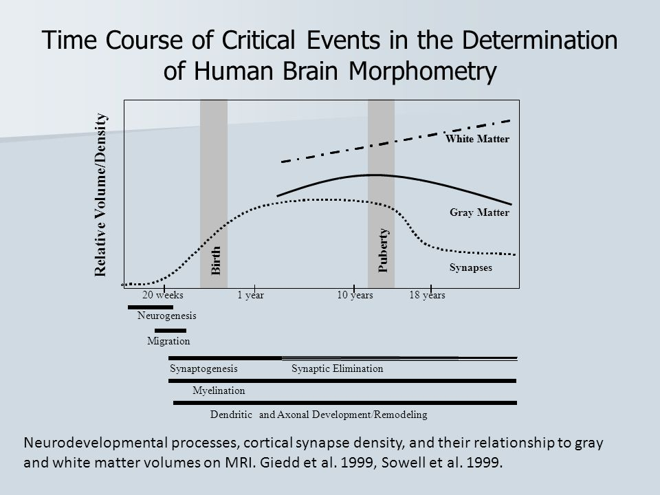 Time Course of Critical Events in the Determination of Human Brain Morphometry Neurodevelopmental processes, cortical synapse density, and their relationship to gray and white matter volumes on MRI.
