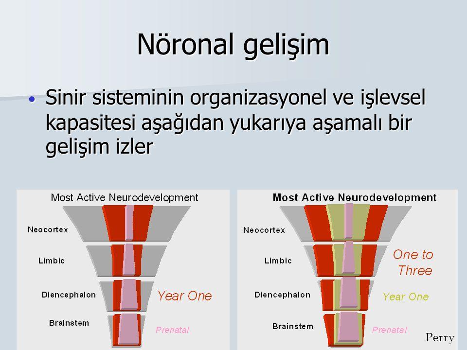 Nöronal gelişim Perry Sinir sisteminin organizasyonel ve işlevsel kapasitesi aşağıdan yukarıya aşamalı bir gelişim izler Sinir sisteminin organizasyon