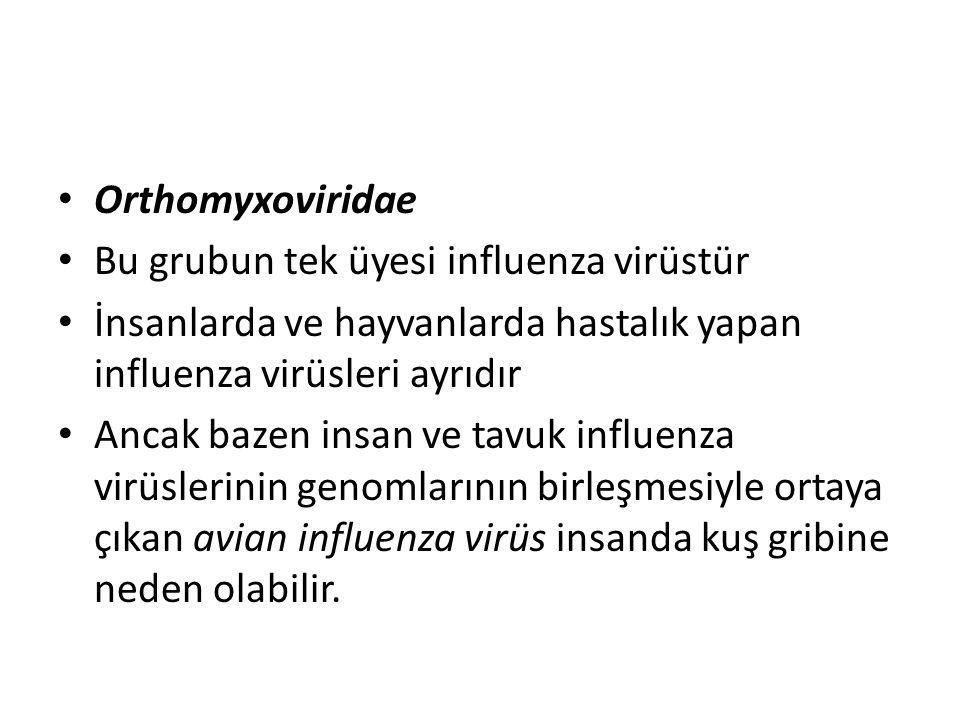 Orthomyxoviridae Bu grubun tek üyesi influenza virüstür İnsanlarda ve hayvanlarda hastalık yapan influenza virüsleri ayrıdır Ancak bazen insan ve tavuk influenza virüslerinin genomlarının birleşmesiyle ortaya çıkan avian influenza virüs insanda kuş gribine neden olabilir.
