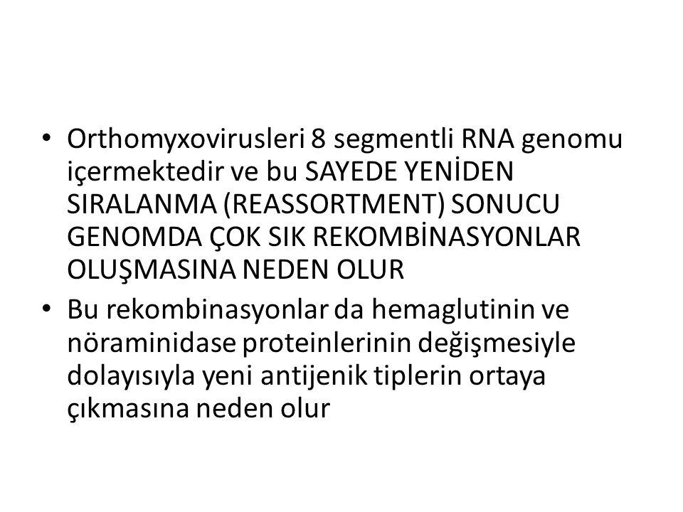 Orthomyxovirusleri 8 segmentli RNA genomu içermektedir ve bu SAYEDE YENİDEN SIRALANMA (REASSORTMENT) SONUCU GENOMDA ÇOK SIK REKOMBİNASYONLAR OLUŞMASINA NEDEN OLUR Bu rekombinasyonlar da hemaglutinin ve nöraminidase proteinlerinin değişmesiyle dolayısıyla yeni antijenik tiplerin ortaya çıkmasına neden olur
