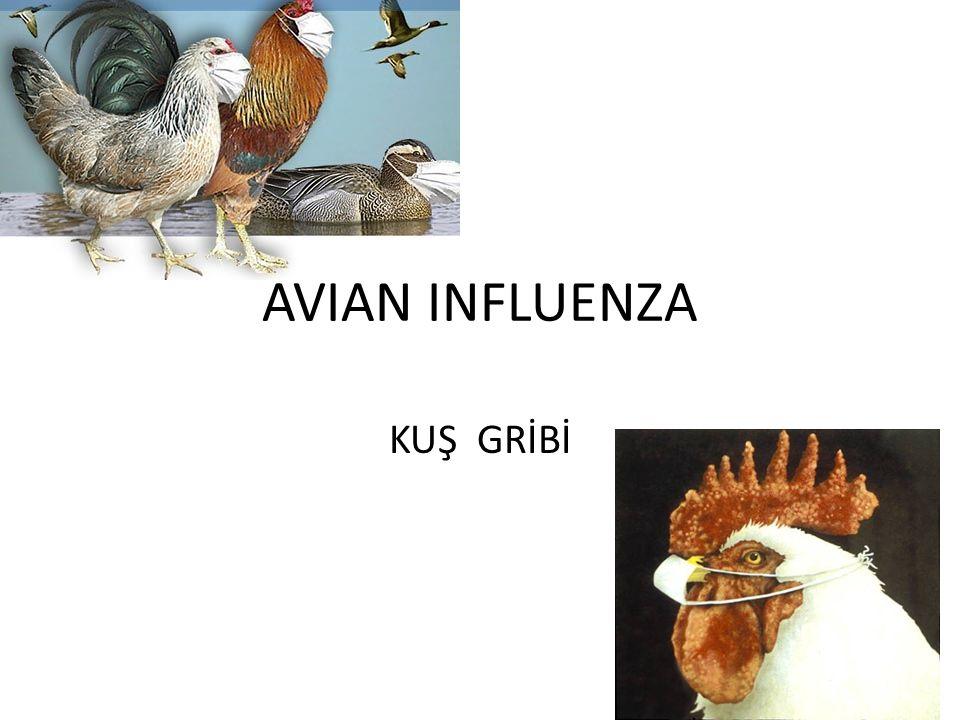 AVIAN INFLUENZA KUŞ GRİBİ