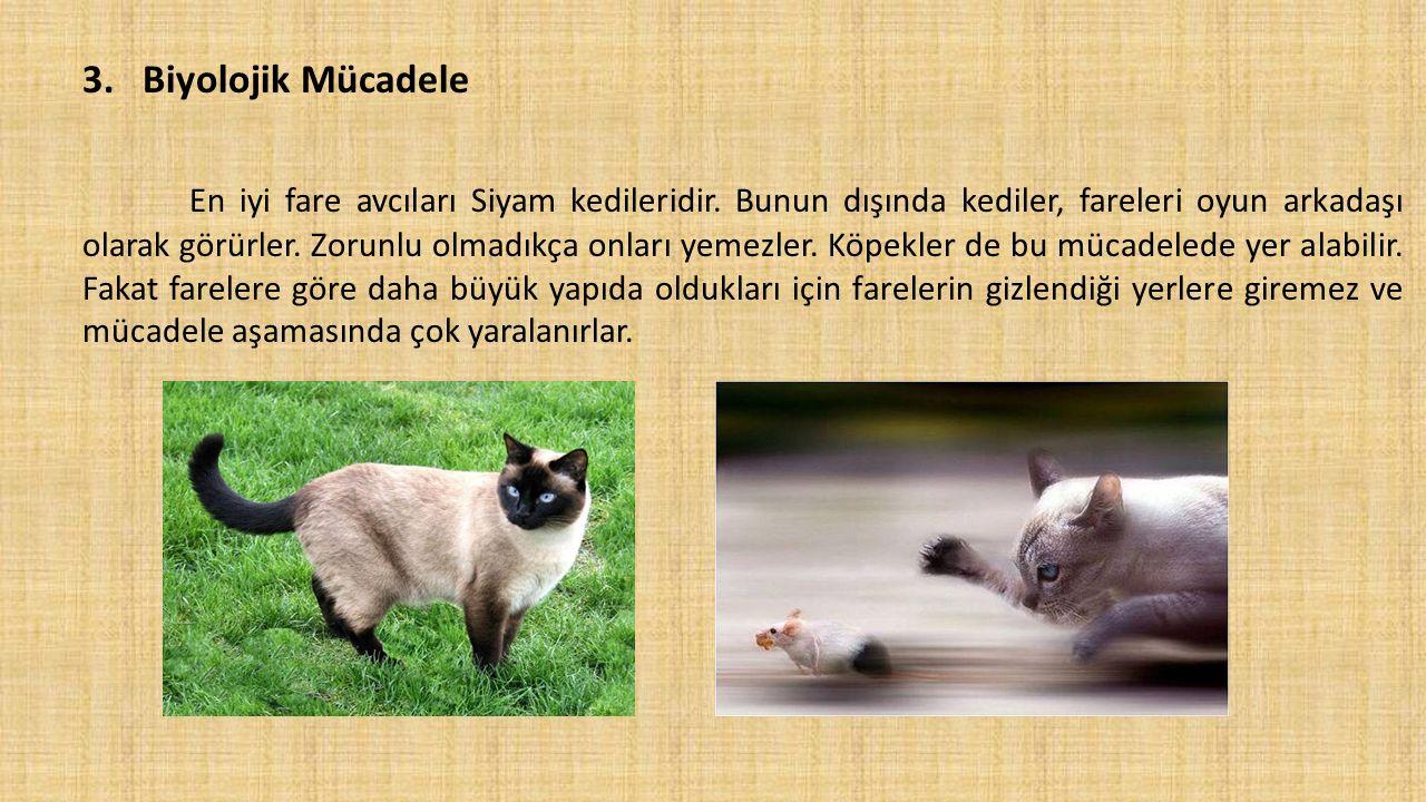 3.Biyolojik Mücadele En iyi fare avcıları Siyam kedileridir. Bunun dışında kediler, fareleri oyun arkadaşı olarak görürler. Zorunlu olmadıkça onları y
