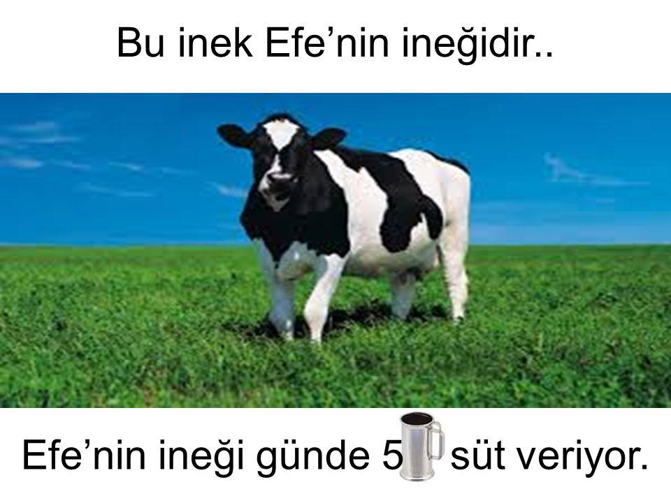 Bu inek Efe'nin ineğidir.. Efe'nin ineği günde 5 süt veriyor.