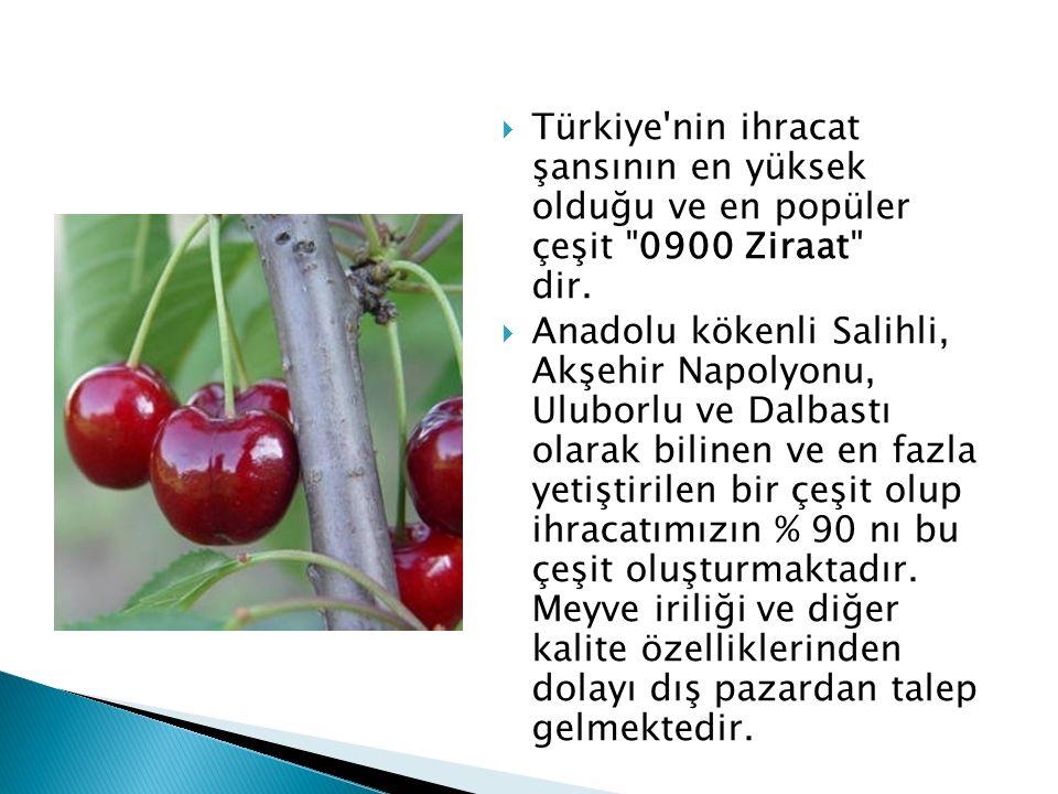  Türkiye'nin ihracat şansının en yüksek olduğu ve en popüler çeşit