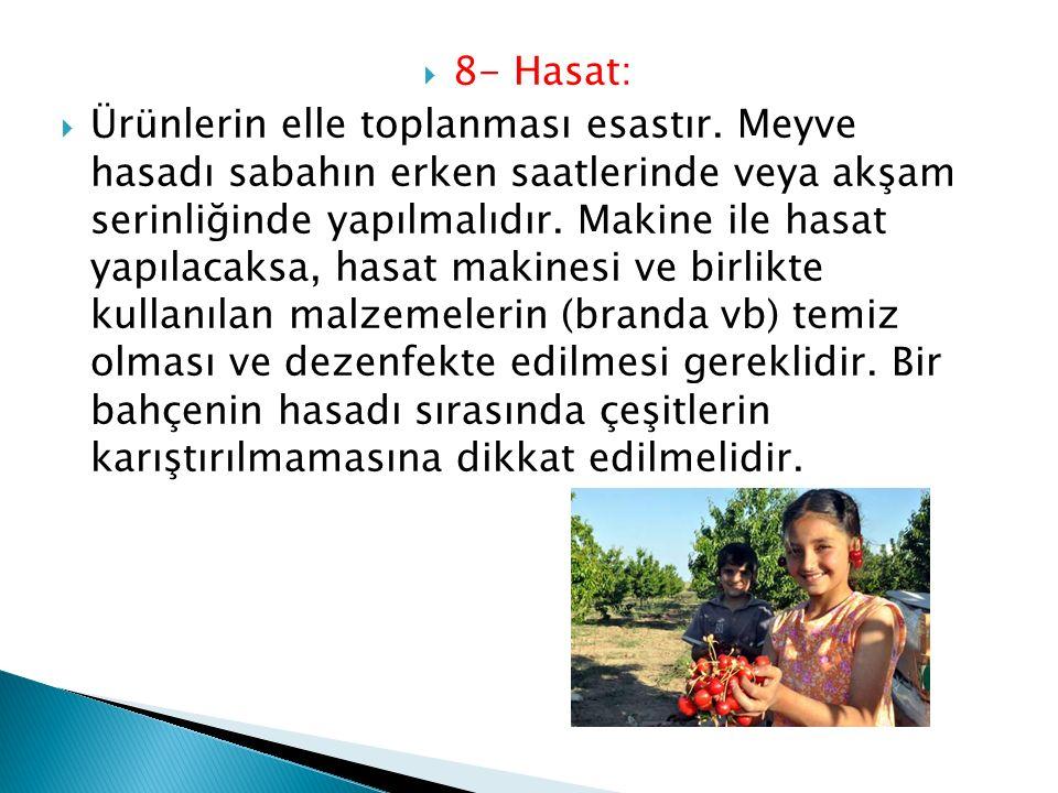  8- Hasat:  Ürünlerin elle toplanması esastır. Meyve hasadı sabahın erken saatlerinde veya akşam serinliğinde yapılmalıdır. Makine ile hasat yapılac