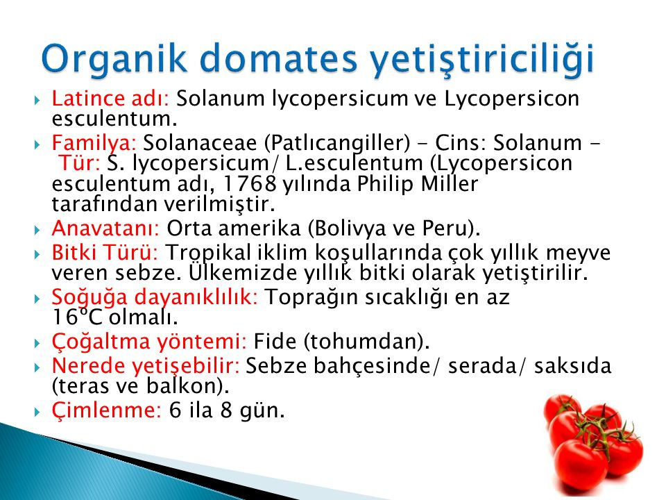  Latince adı: Solanum lycopersicum ve Lycopersicon esculentum.  Familya: Solanaceae (Patlıcangiller) - Cins: Solanum - Tür: S. lycopersicum/ L.escul