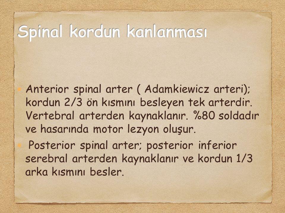 Anterior spinal arter ( Adamkiewicz arteri); kordun 2/3 ön kısmını besleyen tek arterdir. Vertebral arterden kaynaklanır. %80 soldadır ve hasarında mo