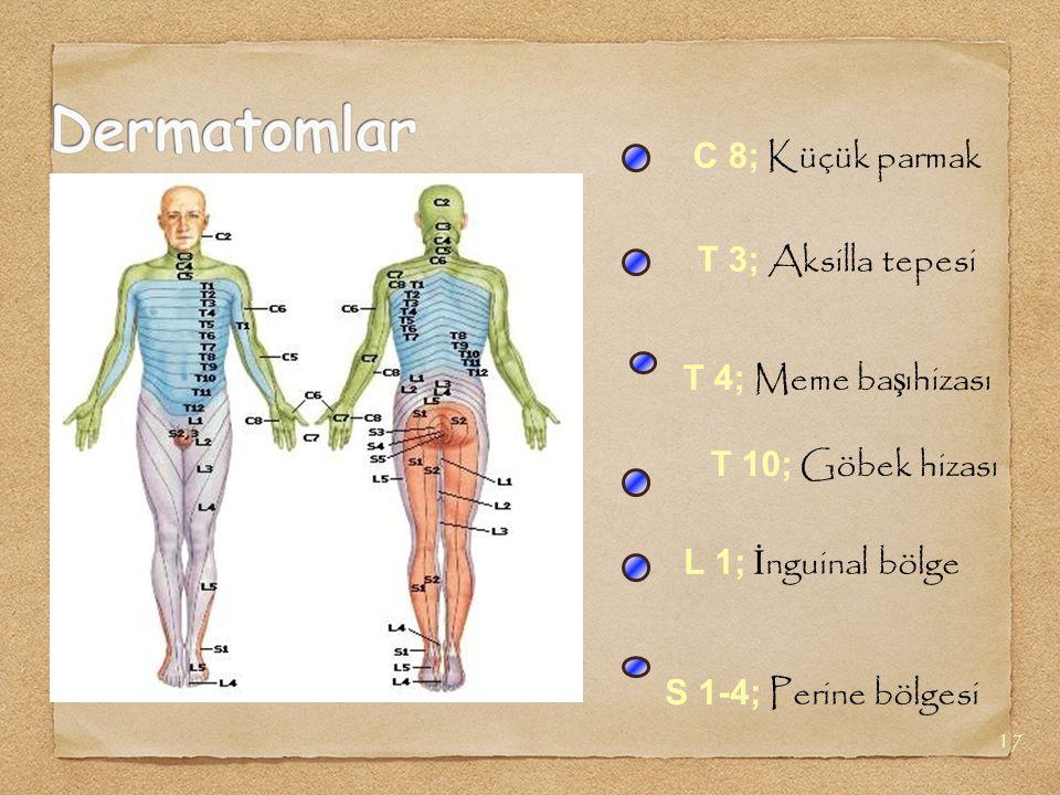 17 T 4; Meme ba ş ıhizası C 8; Küçük parmak T 3; Aksilla tepesi T 10; Göbek hizası L 1; İ nguinal bölge S 1-4; Perine bölgesi
