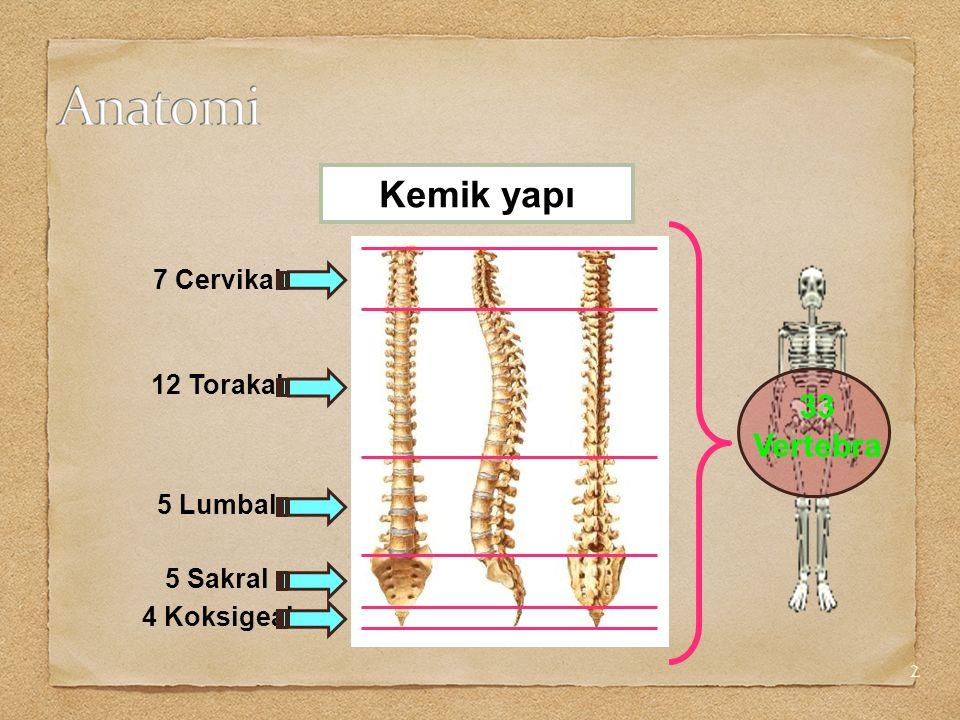 3 L 2 L 3 - 4 L 1- 5 Kemik yapı İnterlaminal foramen Vertebral foramen Spinöz çıkıntı Transvers çıkıntı İntervertebral foramen Pedikül Lamina İntervertebral disk Vertebral korpus
