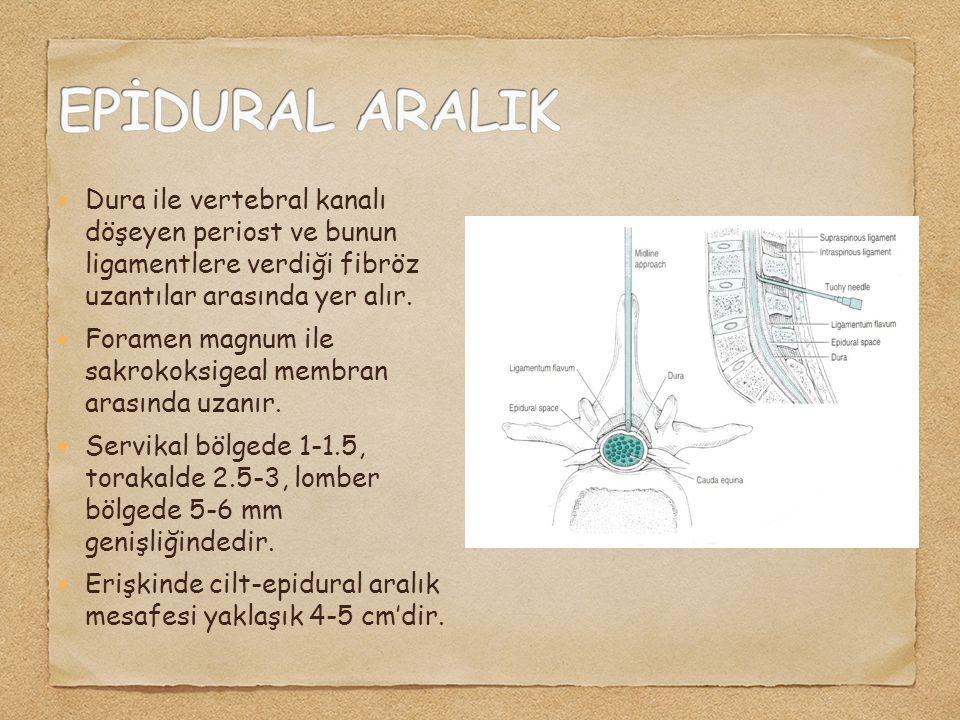 Dura ile vertebral kanalı döşeyen periost ve bunun ligamentlere verdiği fibröz uzantılar arasında yer alır. Foramen magnum ile sakrokoksigeal membran