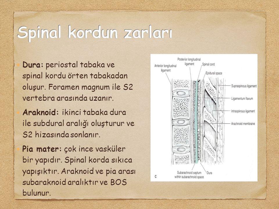 Dura: periostal tabaka ve spinal kordu örten tabakadan oluşur. Foramen magnum ile S2 vertebra arasında uzanır. Araknoid: ikinci tabaka dura ile subdur