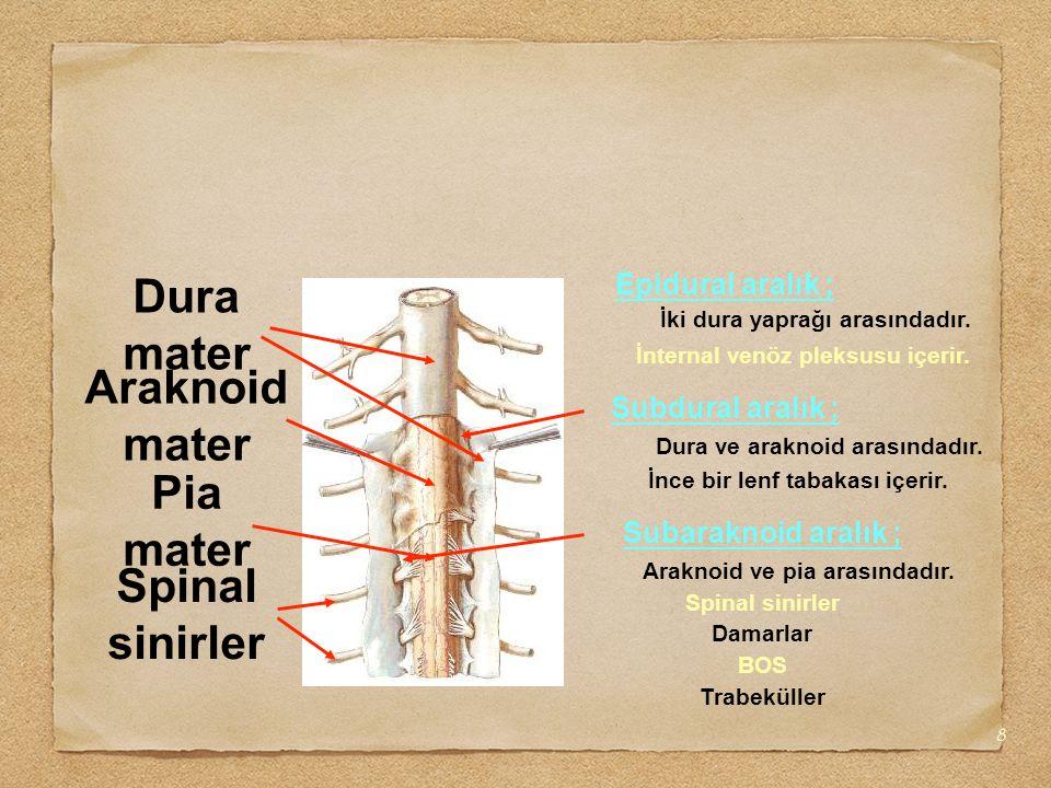 8 Araknoid mater Dura mater Pia mater Spinal sinirler Epidural aralık ; İki dura yaprağı arasındadır. İnternal venöz pleksusu içerir. Dura ve araknoid