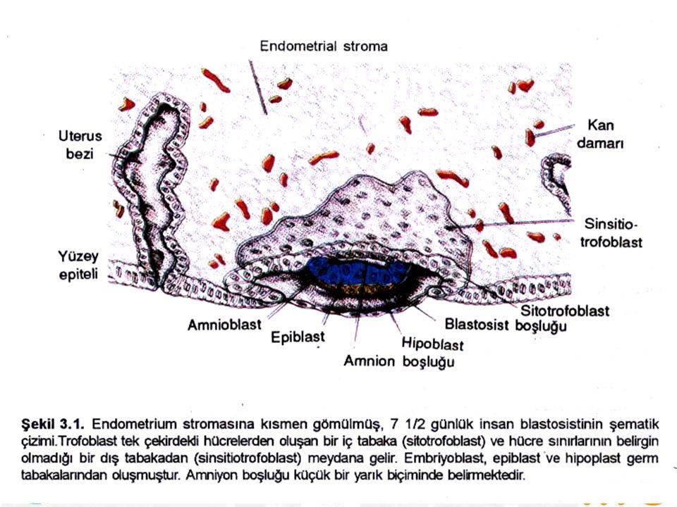 İnfeksiyon Ajanları  Rubella (kızamıkçık)  Sitomegalovirüs (CMV)  Herpes simplex virüsü (HSV)  Varicella (suçiçeği)  HIV  Toksoplazmozis  Sifiliz