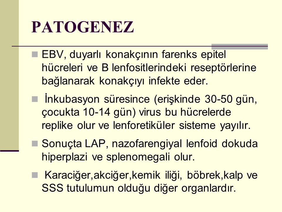 PATOGENEZ EBV, duyarlı konakçının farenks epitel hücreleri ve B lenfositlerindeki reseptörlerine bağlanarak konakçıyı infekte eder. İnkubasyon süresin