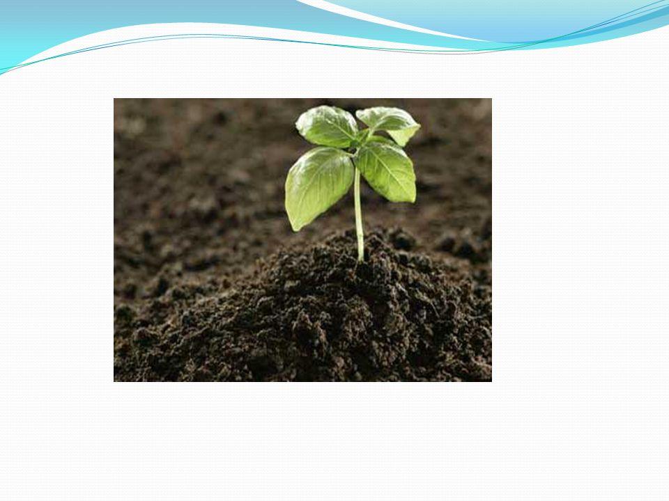 Sürdürülebilir tarım tek bir şekilde yapılmaz.