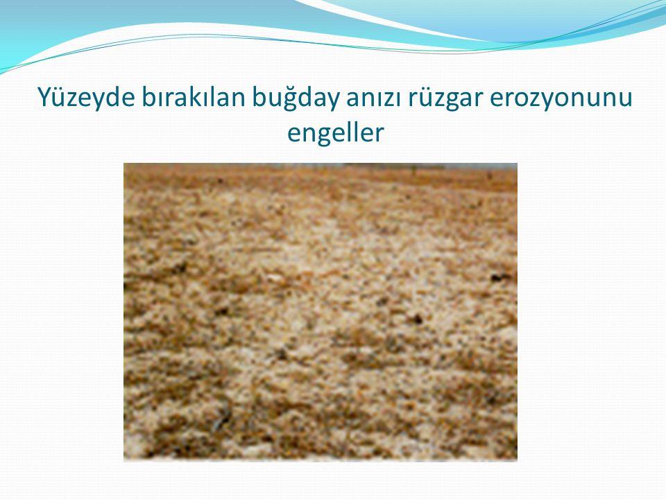 Yüzeyde bırakılan buğday anızı rüzgar erozyonunu engeller