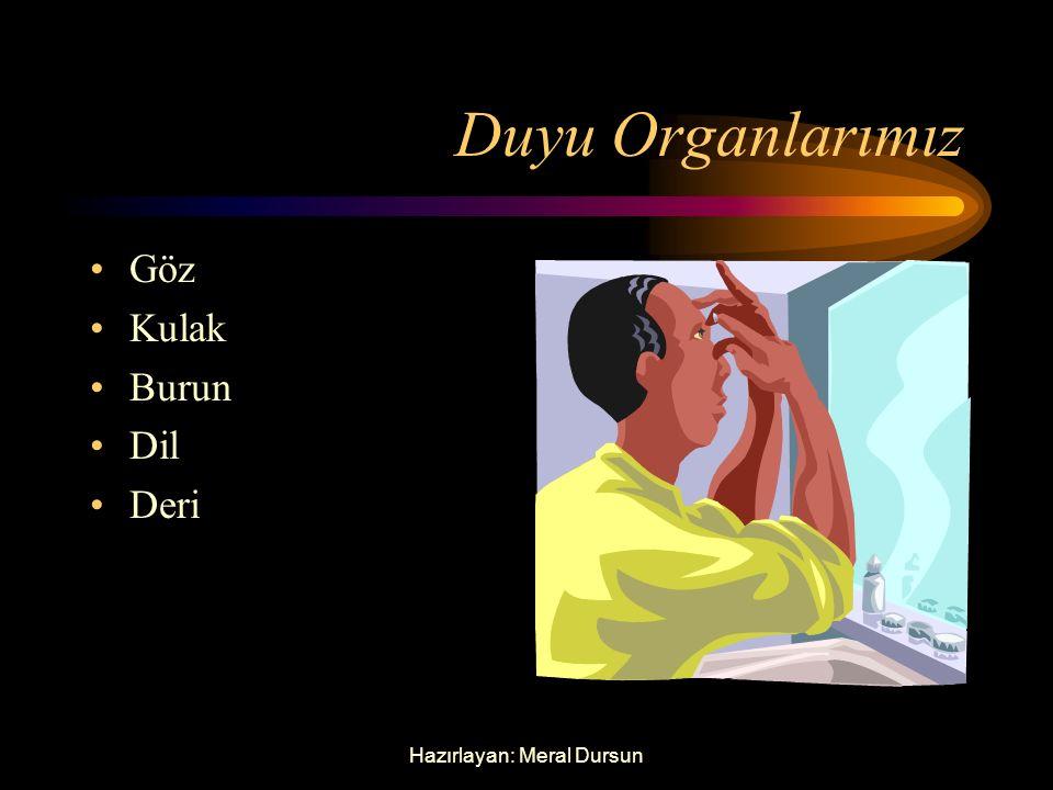Sağlıklı Büyüyelim Vücudumuzu Tanıyalım Duyu Organlarımız İç Organlarımız
