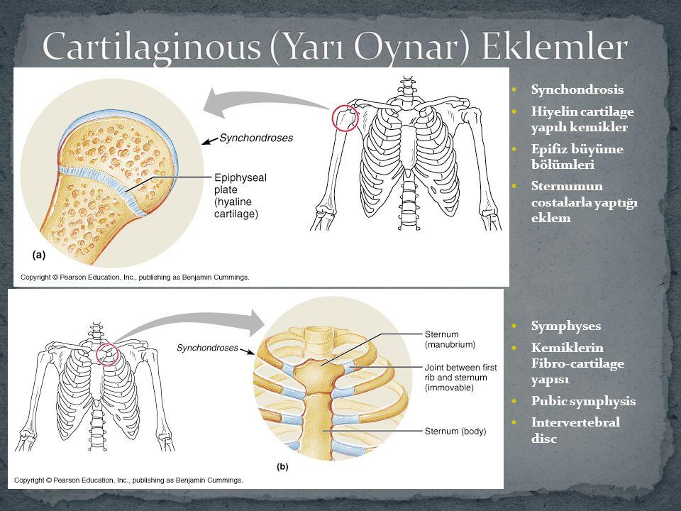 Synchondrosis Hiyelin cartilage yapılı kemikler Epifiz büyüme bölümleri Sternumun costalarla yaptığı eklem Symphyses Kemiklerin Fibro-cartilage yapısı Pubic symphysis Intervertebral disc