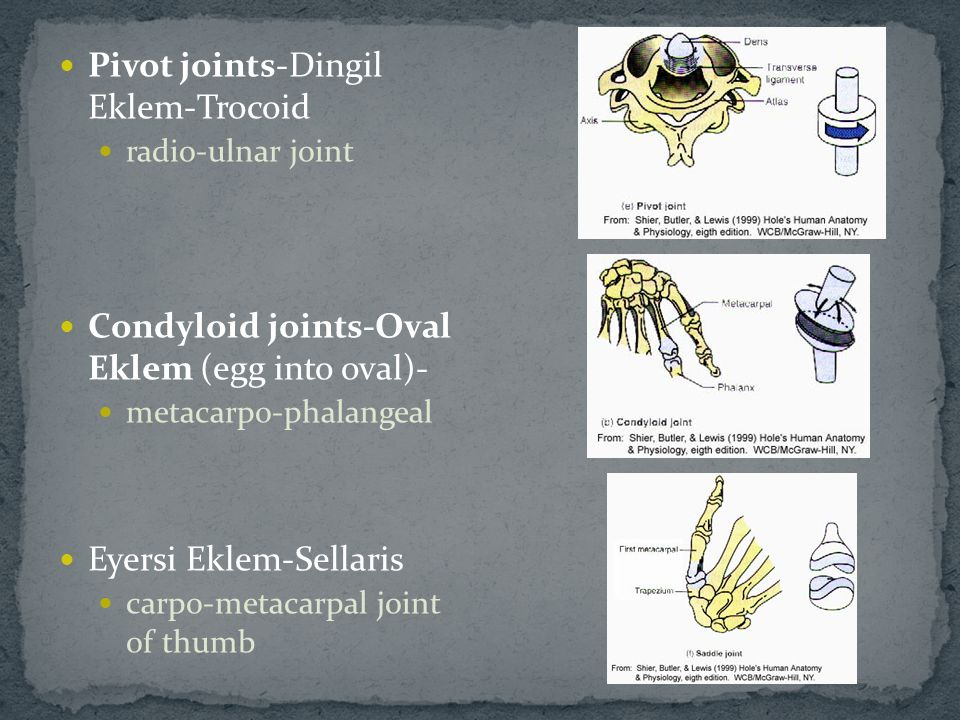 Pivot joints-Dingil Eklem-Trocoid radio-ulnar joint Condyloid joints-Oval Eklem (egg into oval)- metacarpo-phalangeal Eyersi Eklem-Sellaris carpo-meta