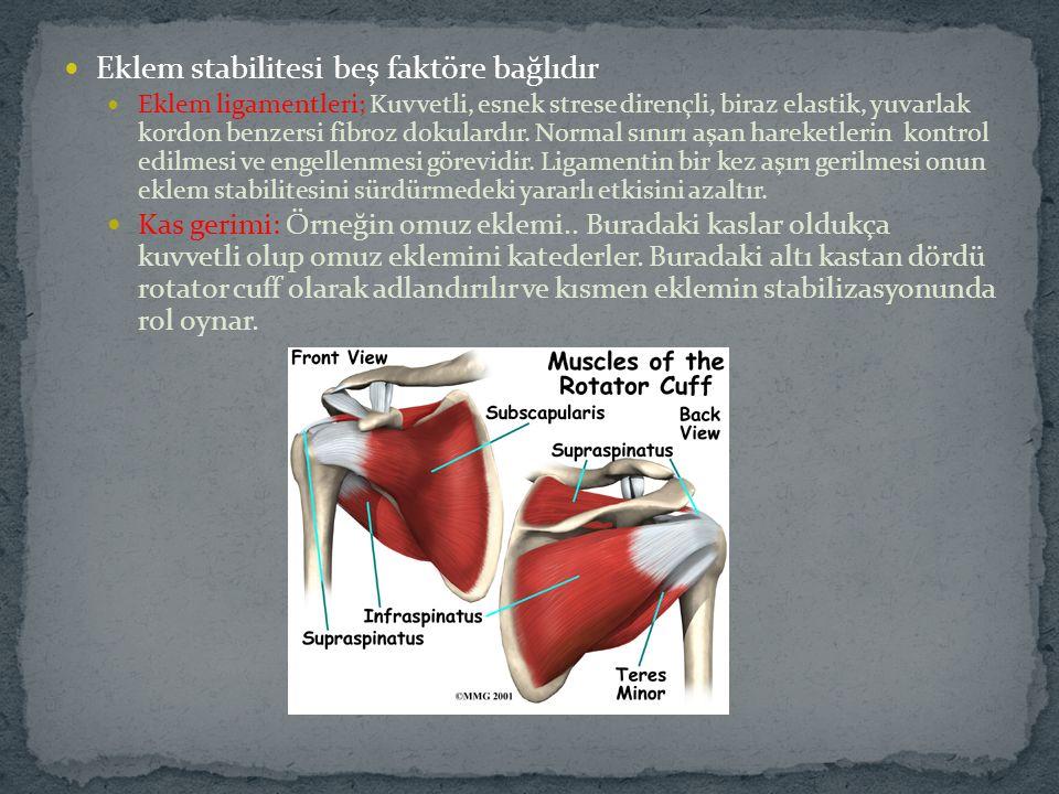 Eklem stabilitesi beş faktöre bağlıdır Eklem ligamentleri; Kuvvetli, esnek strese dirençli, biraz elastik, yuvarlak kordon benzersi fibroz dokulardır.
