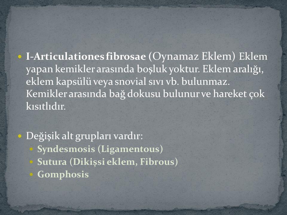 I-Articulationes fibrosae ( Oynamaz Eklem) Eklem yapan kemikler arasında boşluk yoktur.