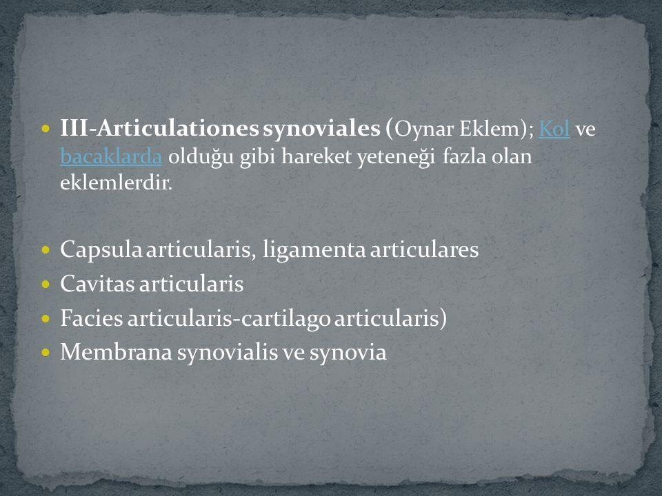 III-Articulationes synoviales ( Oynar Eklem); Kol ve bacaklarda olduğu gibi hareket yeteneği fazla olan eklemlerdir.Kol bacaklarda Capsula articularis, ligamenta articulares Cavitas articularis Facies articularis-cartilago articularis) Membrana synovialis ve synovia