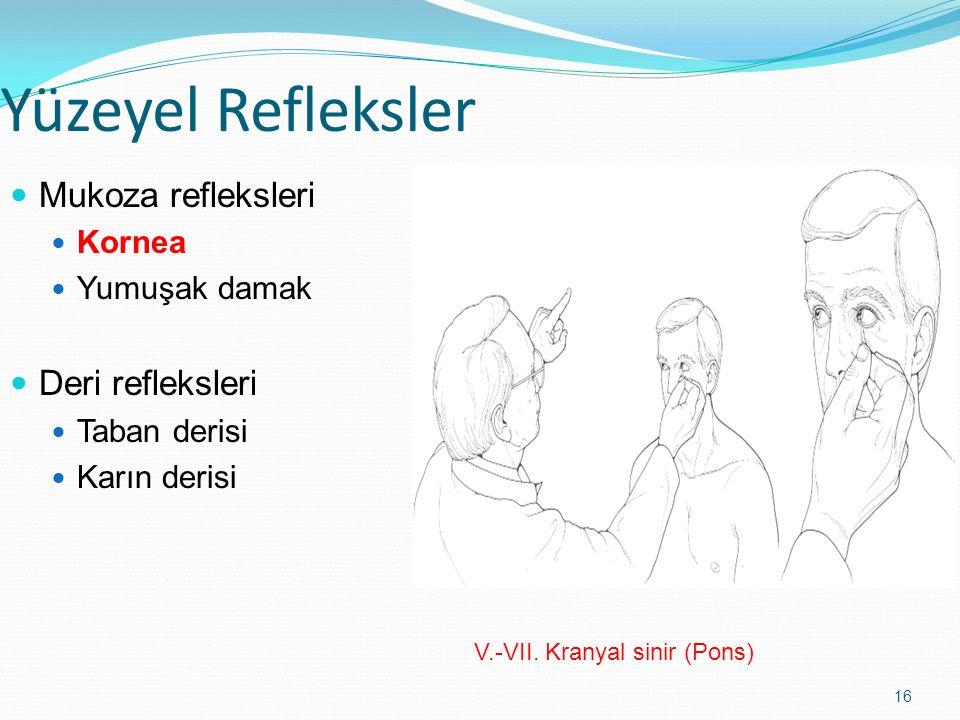16 Yüzeyel Refleksler Mukoza refleksleri Kornea Yumuşak damak Deri refleksleri Taban derisi Karın derisi V.-VII. Kranyal sinir (Pons)