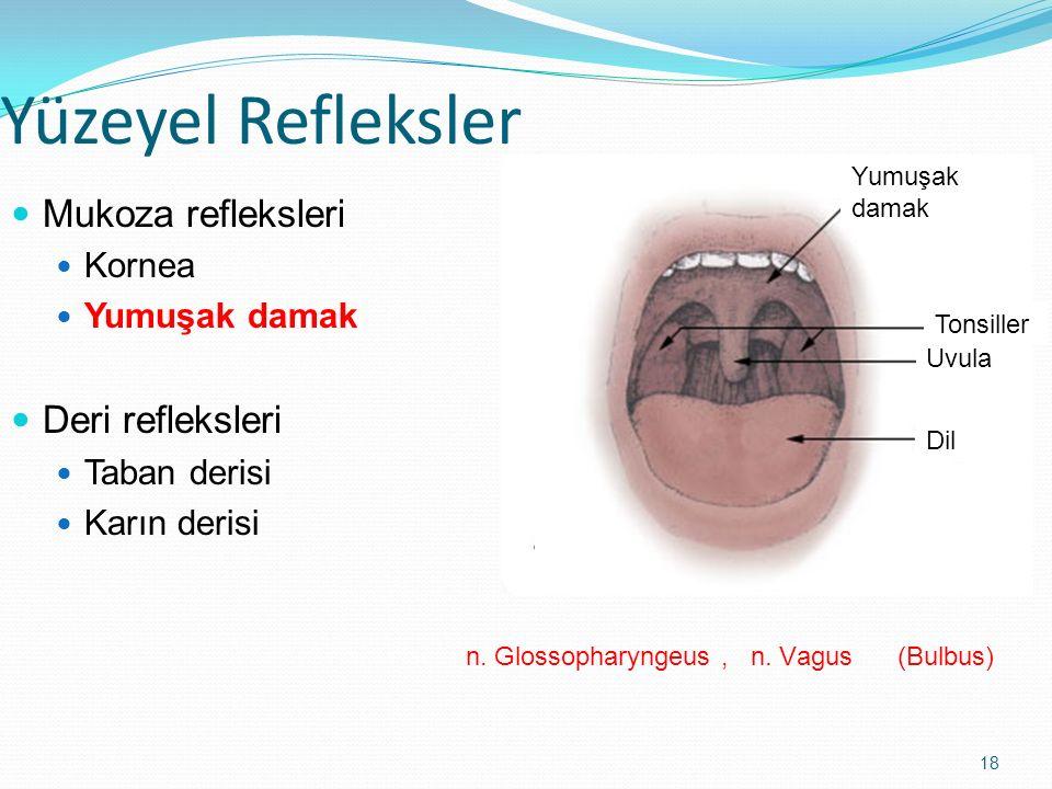 18 Yüzeyel Refleksler Mukoza refleksleri Kornea Yumuşak damak Deri refleksleri Taban derisi Karın derisi Yumuşak damak Tonsiller Uvula Dil n. Glossoph