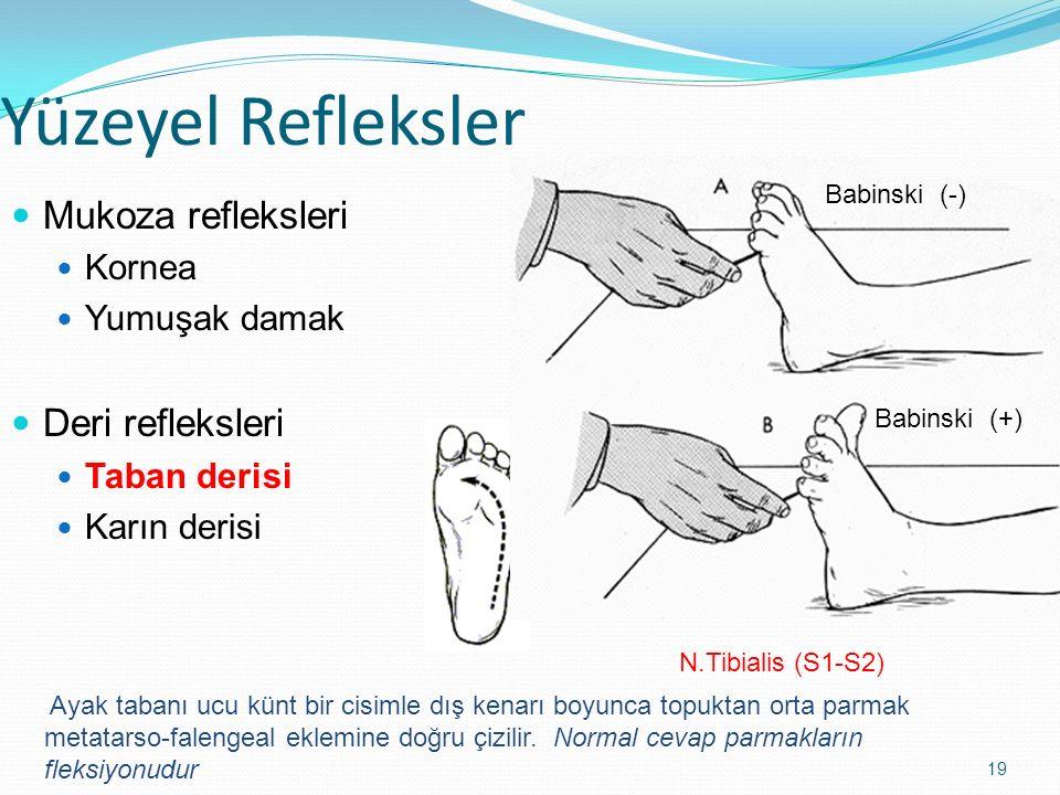 19 Yüzeyel Refleksler Mukoza refleksleri Kornea Yumuşak damak Deri refleksleri Taban derisi Karın derisi N.Tibialis (S1-S2) Babinski (-) Babinski (+)