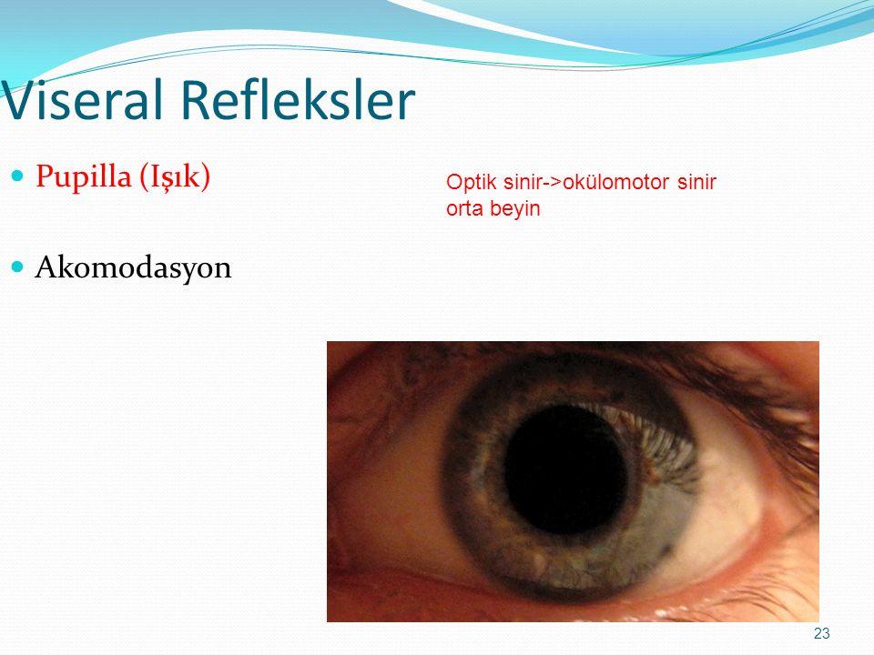23 Viseral Refleksler Pupilla (Işık) Akomodasyon Optik sinir->okülomotor sinir orta beyin