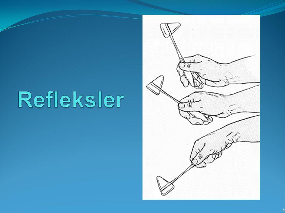 Yüzeyel Refleksler Mukoza refleksleri Kornea Yumuşak damak Deri refleksleri Taban derisi Karın derisi 15