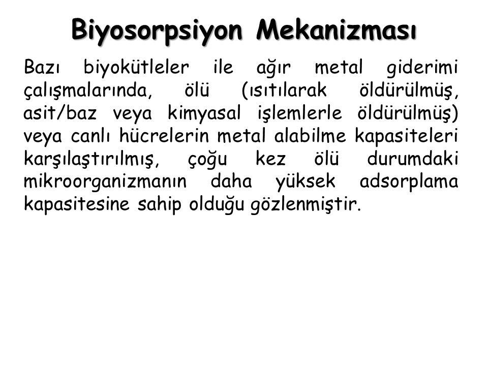 Biyosorpsiyon Mekanizması Bazı biyokütleler ile ağır metal giderimi çalışmalarında, ölü (ısıtılarak öldürülmüş, asit/baz veya kimyasal işlemlerle öldü