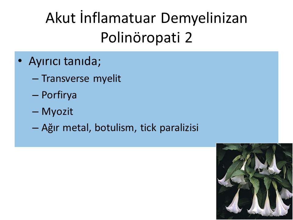 Akut İnflamatuar Demyelinizan Polinöropati 2 Ayırıcı tanıda; – Transverse myelit – Porfirya – Myozit – Ağır metal, botulism, tick paralizisi