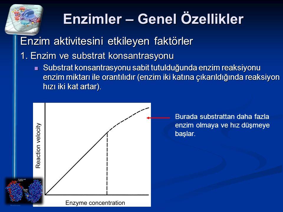 Enzimler – Genel Özellikler Enzim aktivitesini etkileyen faktörler 1. Enzim ve substrat konsantrasyonu Substrat konsantrasyonu sabit tutulduğunda enzi