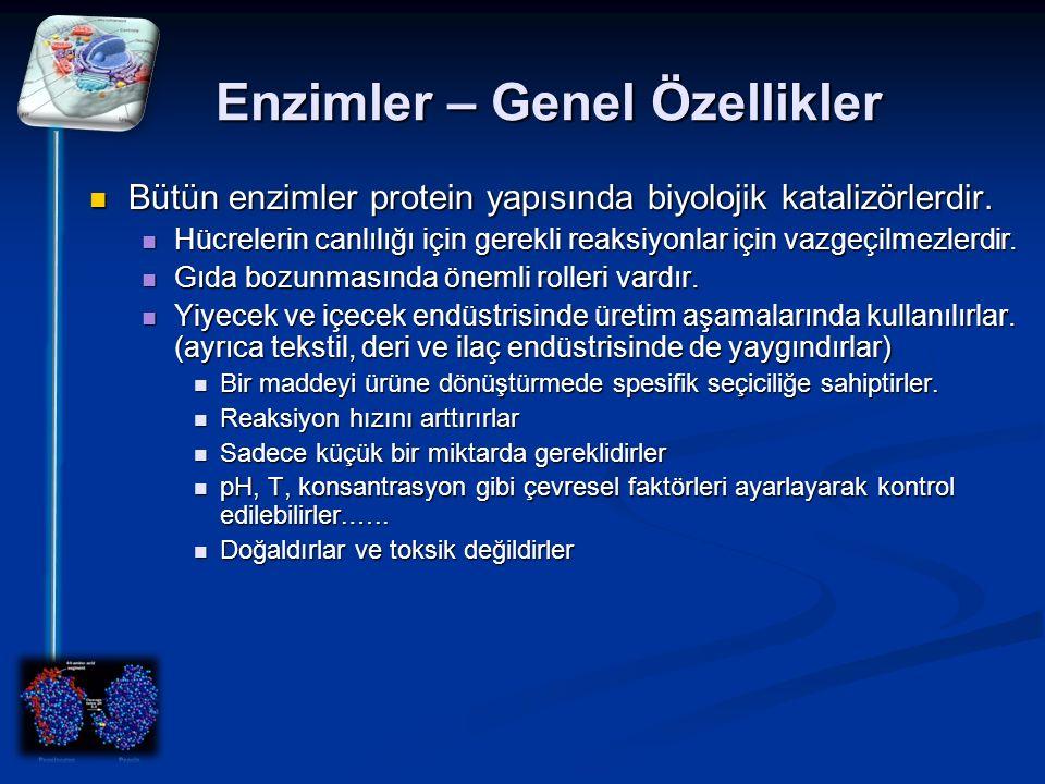 Enzimler – Genel Özellikler Bütün enzimler protein yapısında biyolojik katalizörlerdir. Bütün enzimler protein yapısında biyolojik katalizörlerdir. Hü