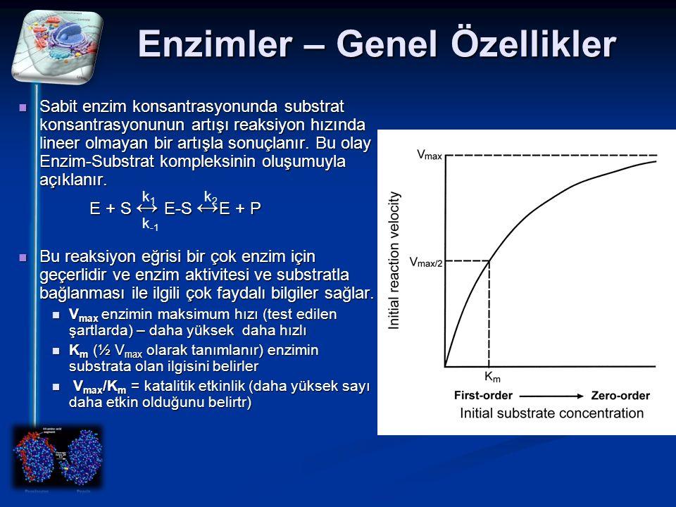 Enzimler – Genel Özellikler Sabit enzim konsantrasyonunda substrat konsantrasyonunun artışı reaksiyon hızında lineer olmayan bir artışla sonuçlanır. B