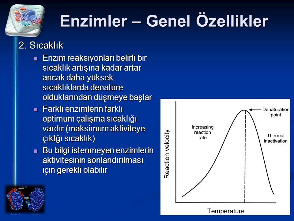 Enzimler – Genel Özellikler 2. Sıcaklık Enzim reaksiyonları belirli bir sıcaklık artışına kadar artar ancak daha yüksek sıcaklıklarda denatüre oldukla