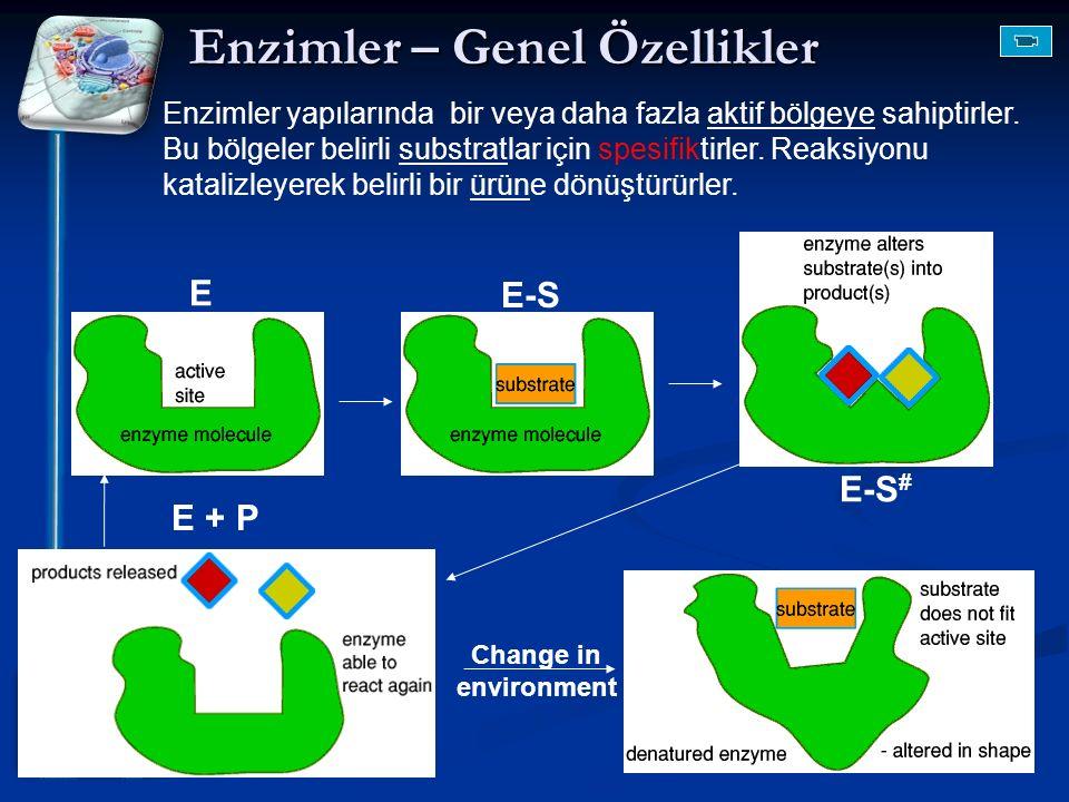 Change in environment Enzimler yapılarında bir veya daha fazla aktif bölgeye sahiptirler. Bu bölgeler belirli substratlar için spesifiktirler. Reaksiy